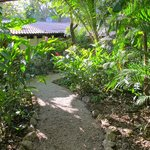  Jungle path to our room