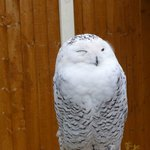 Gentleshaw Birds of Prey and Wildlife Centre