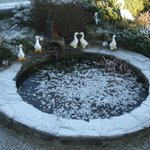  Garden pond - frozen