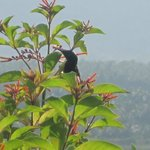 Sunbirds so close that you don't need binoculars