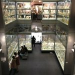 Inside the Hunterian Museum