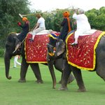  Dera Amer Elephant Polo in the saddle
