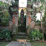 A cat and temple within the hotel grounds