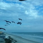  The Pelicans that regularly flew by our balcony were an added bonus