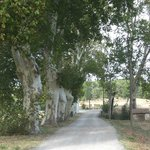  Laneway to the winery