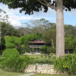  The garden Ceiba tree with view of La Casa de Don David