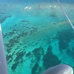 over the reef