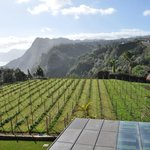  View of hotel vineyard from room
