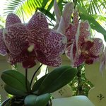 Orchids on every table - how beautiful.