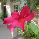  Flowers on the porch