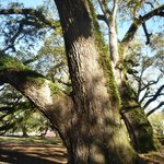  Oak Alley has beautiful trees