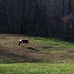  Horse at Barking Fox Farms