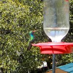 Hummer feeding of deck.