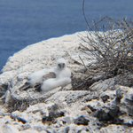 Baby Boobi, hike to the Cayman Brac Lighthouse