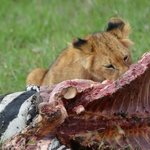 lions lunch break