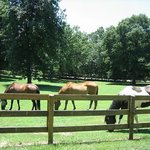  We offer stabling for our guests&#39; horses