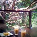 Afternoon tea by the tree