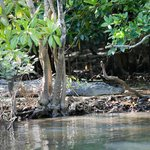 Croc spotting on jungle river cruise