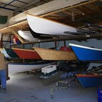 Dusty in the Rowing Club Storage & Workshop