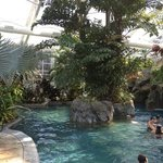  biosphere pool