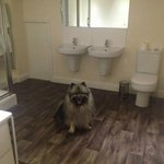 Mayhem checking out the HUGE ensuite