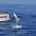 Humdinger Sportfishing