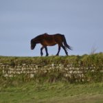 Horse on Rame Head just up the road