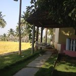  swing beds outside cottages overlooking paddy fields