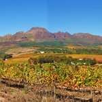 Wine lands on R44