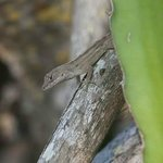  Lizard in the Courtyard
