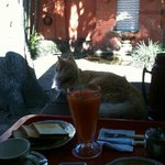 breakfast with friendly house cat