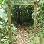 Jungle trail entrance