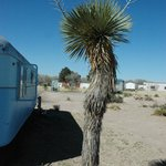 Yucca outside the Kozy Coach