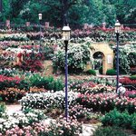  Tyler Rose Garden