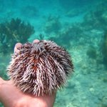 My little boy holding an urchin