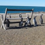 Estancia San Lorenzo, Pinguins Land