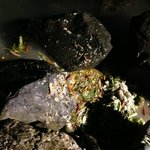  kitchen dumping waste in the ocean