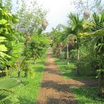  Path to the bungalows