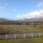  View from our room with sheep and baby lambs grazing.