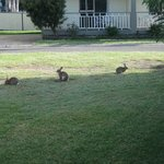  Bunnies in the Park!