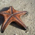  Starfish along the beach