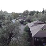 wonderful wild mediterranean garden and olive trees