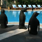 Bizarre penguins in the pool area