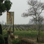  Gold dust growing on the vines behind the hotel (2)