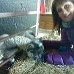  Allison feeding the Bassettwood lambs