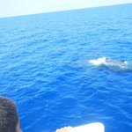  Mom and baby whale came right next to boat. Highlight of the trip!
