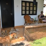 dogs outside of our bungalow