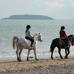  Pony Riding on the Beach