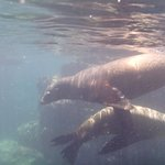 Snorkeling with sea lions, set up with Leo, 3/2013