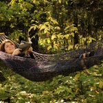 Relax in comfort in the forest